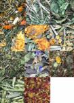 Pack 11 diferentes hierbas