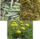 Pack 3 diferentes hierbas