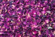Flores de rosal