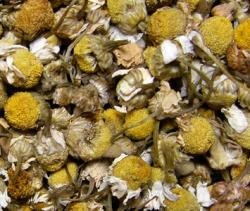 Kamilleblüten